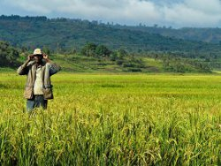 Photo credit: International Rice Research Institute