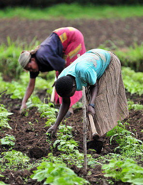 Photo credit: International Center for Tropical Agriculture